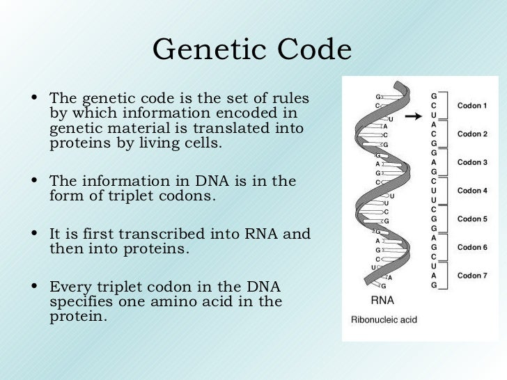 Genetic Code <ul><li>The genetic code is the set of rules by which information encoded in genetic material is translated i...