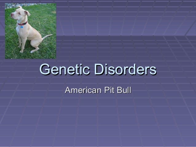 Genetic Disorders American Pit Bull
