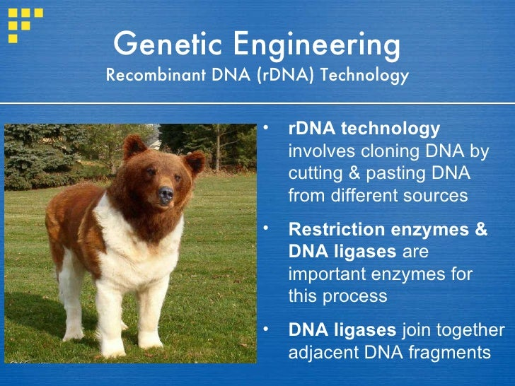 Genetic Engineering Recombinant DNA (rDNA) Technology <ul><li>rDNA technology  involves cloning DNA by cutting & pasting D...