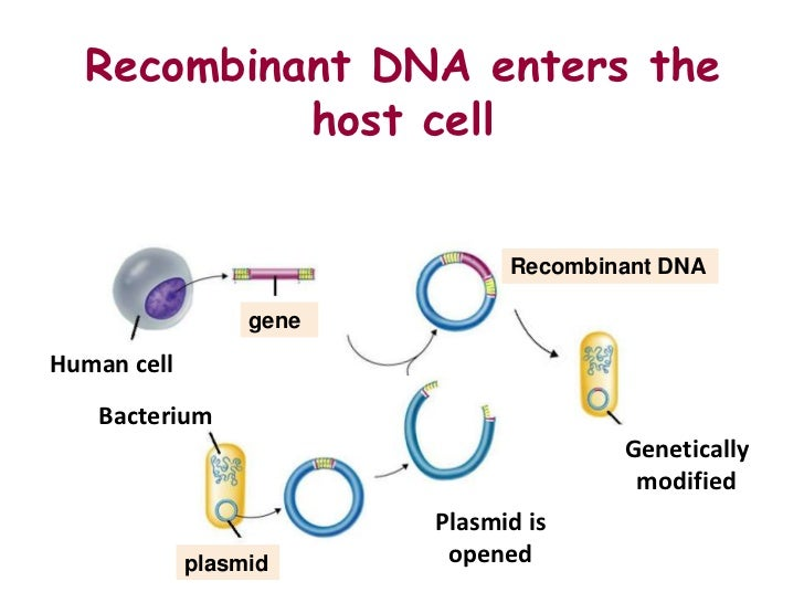 the methods of engineering a plasmid to include a foreign piece of dna In summary, a plasmid is a circular piece of dna, which can be used as a vector for dna of interest in molecular biology experiments a multiple cloning site is the location in a plasmid where a sequence of dna can be inserted an origin of replication is the place where the process of dna replication begins it is a critical component of a dna plasmid because it ensures the plasmid is passed from mother to daughter cells during cell division.