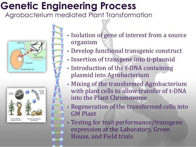 genetic engineering 28 Genetic engineering is the technique that gives the power to desirably manipulate the genome of an organism this ability has been explored and experimented in several organisms, some of which have been commercialized whereas the practical applications of some are being tested.