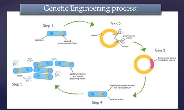 genetic engineering ethics essay genetic engineering  genetic engineering ethics essay