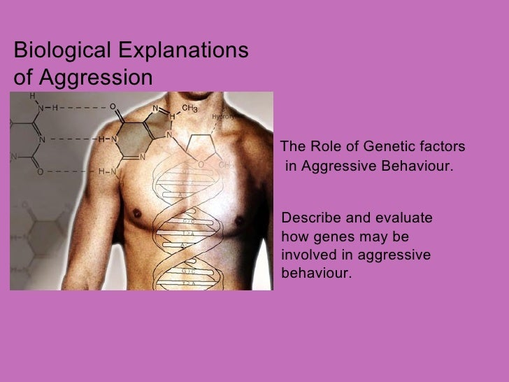 Biological Explanations of Aggression The Role of Genetic factors in Aggressive Behaviour. Describe and evaluate  how gene...