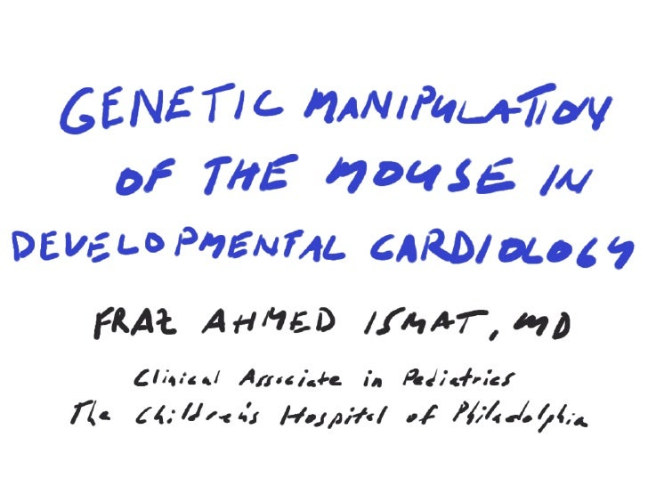 Genetic Manipulation Of The Mouse