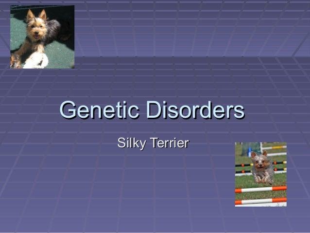 Genetic Disorders     Silky Terrier
