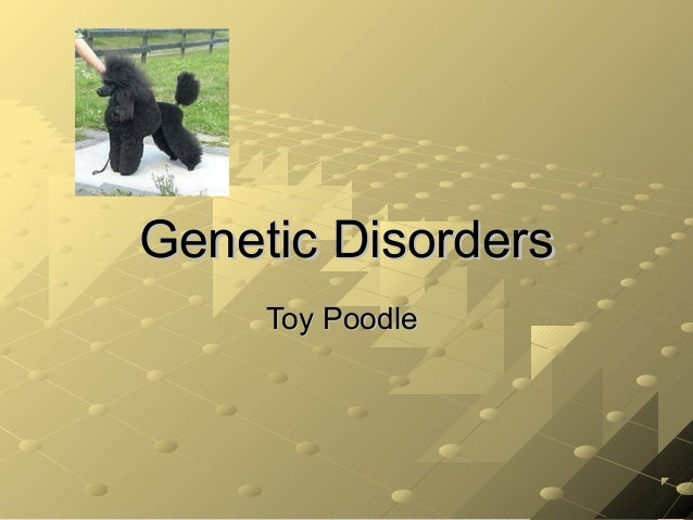 Genetic Disorders Toy Poodle