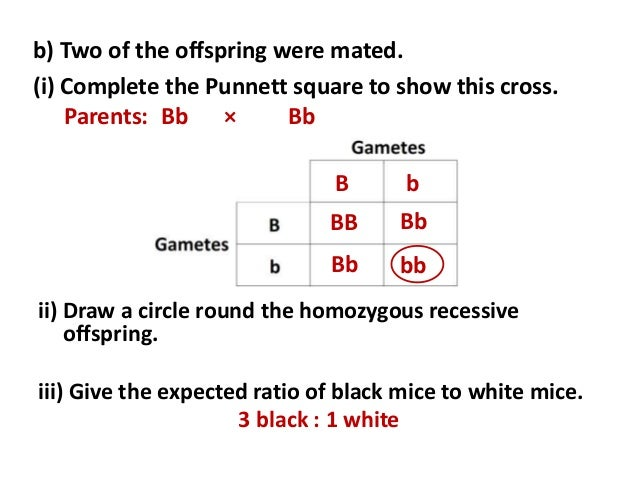 a construction of a punnett square to follow a mutation Genetic disorders 03/24/2016 see bb for  c caused by a mutation of the hexa  use a punnett square to determine all possible offspring genotypes and .