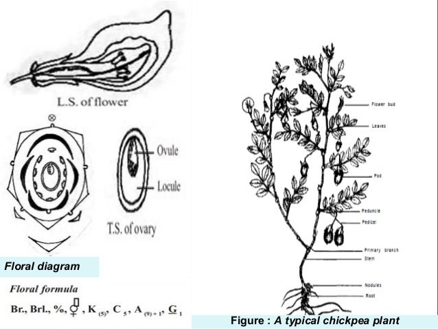 T0073E02 also Hugelkultur  posting Whole Trees With Ease as well Parts Of A Plant Coloring Pages in addition Ge ics And Plant Breeding Seminar moreover Sunflower Parts Of What They Do YGO 7CYjBeJOFSU6Jzw6 CsKs 7CTcn5jyeOfMPDVcaCxv4. on flower process diagram