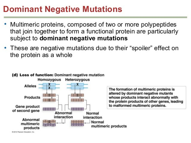 protein synthesis mutations