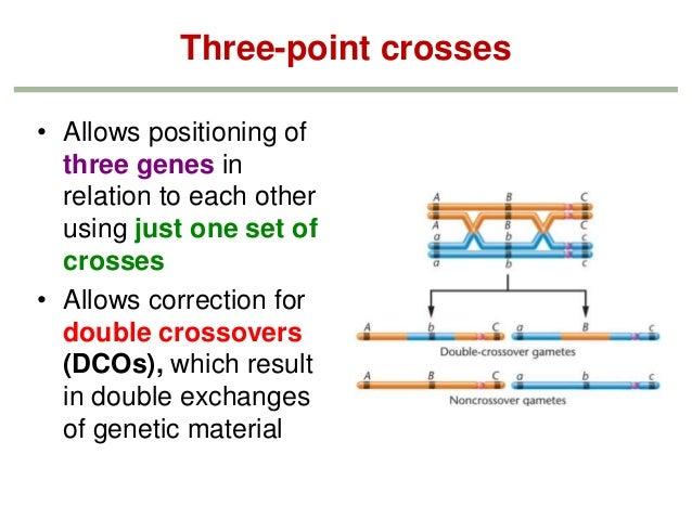 Genetics Chapter