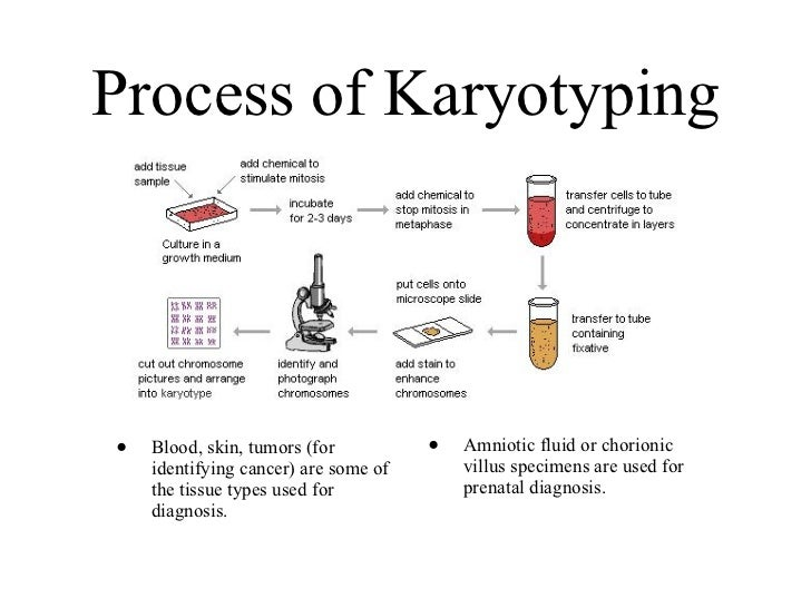 process of karyotyping A complete set of metaphase chromosomes is called a karyotype use of karyotype analysis biology essay genetic counselling is a communication process that.