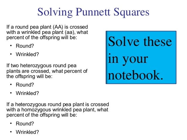 Solving Punnett SquaresIf a round pea plant (AA) is crossedwith a wrinkled pea plant (aa), whatpercent of the offspring wi...