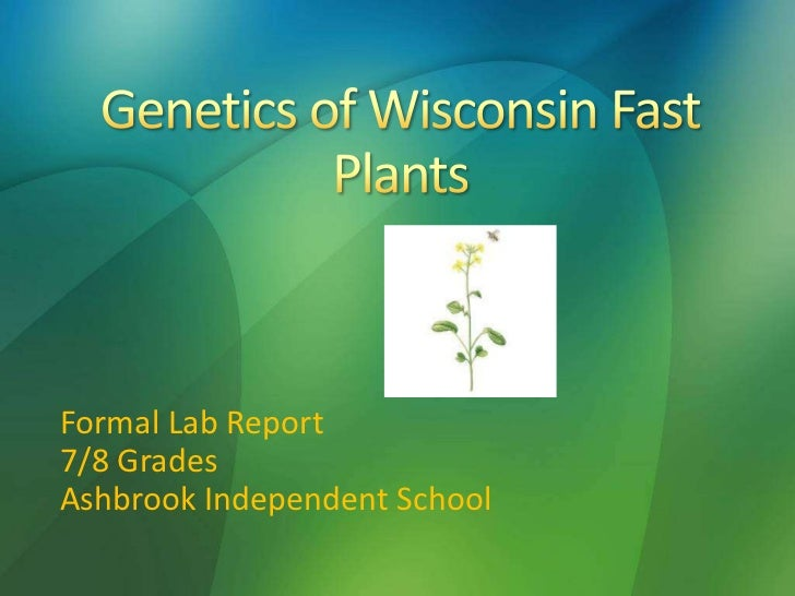 the genetics of fast plants 4) small, sequenced genome – many plants have very large genomes, making it  difficult to study specific genes the quick plant™ genome is a very small.