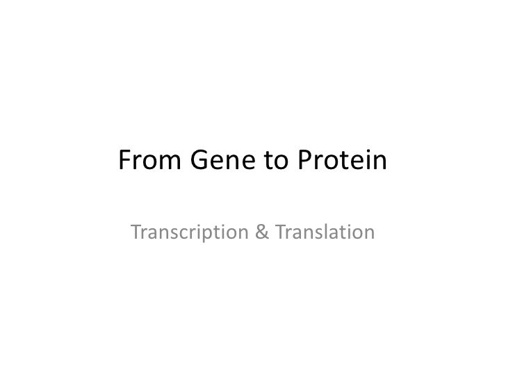 From Gene to ProteinTranscription & Translation