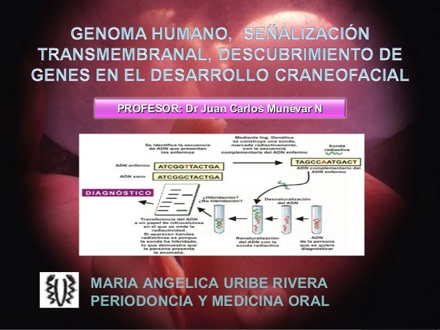 PROFESOR: Dr Juan Carlos Munévar NMARIA ANGELICA URIBE RIVERAPERIODONCIA Y MEDICINA ORAL