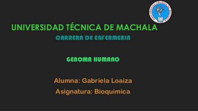 UNIVERSIDAD TÉCNICA DE MACHALA CARRERA DE ENFERMERIA GENOMA HUMANO  Alumna: Gabriela Loaiza Asignatura: Bioquimica