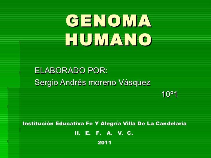 GENOMA HUMANO ELABORADO POR: Sergio Andrés moreno Vásquez 10º1 <ul><li>Institución Educativa Fe Y Alegría Villa De La Cand...