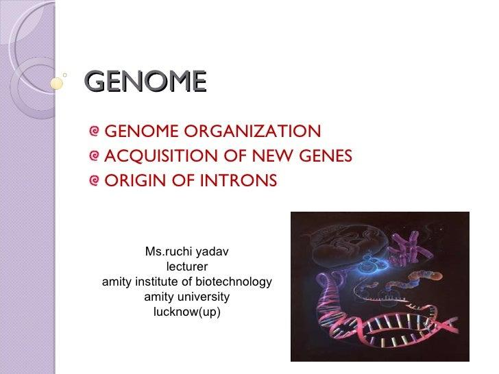 GENOME <ul><li>GENOME ORGANIZATION </li></ul><ul><li>ACQUISITION OF NEW GENES </li></ul><ul><li>ORIGIN OF INTRONS </li></u...