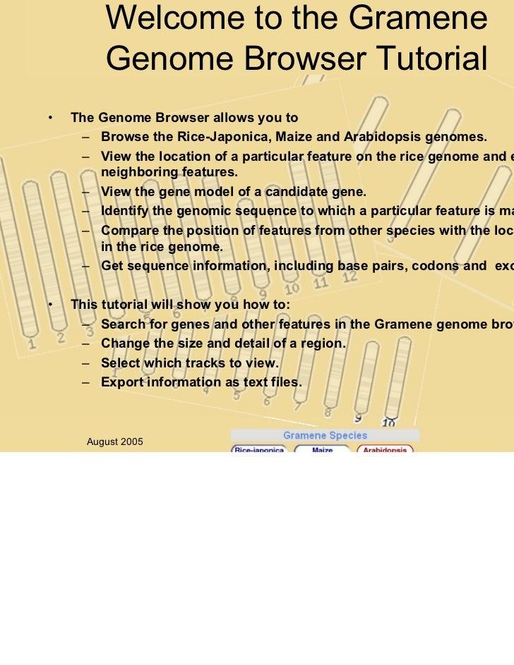 Welcome to the Gramene                                                                                   v.20         Geno...