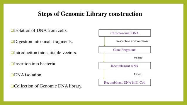genomic library construction - photo #43