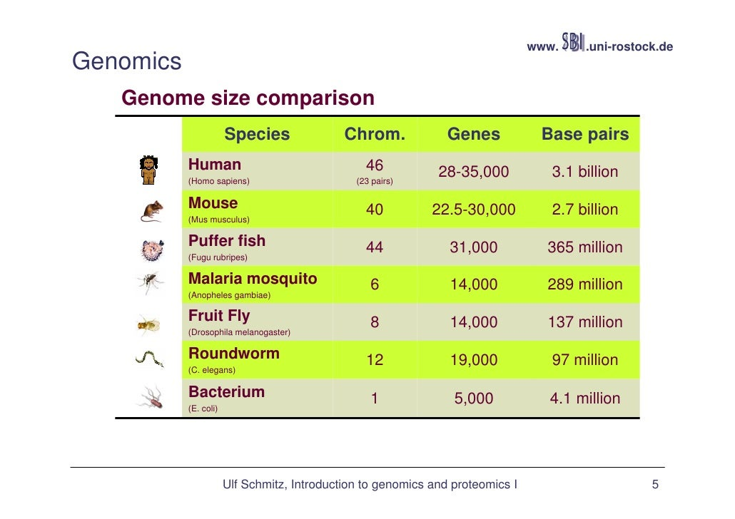 Comparing different eukaryotic genomes?