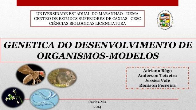 UNIVERSIDADE ESTADUAL DO MARANHÃO - UEMA CENTRO DE ESTUDOS SUPERIORES DE CAXIAS - CESC CIÊNCIAS BIOLOGICAS LICENCIATURA GE...