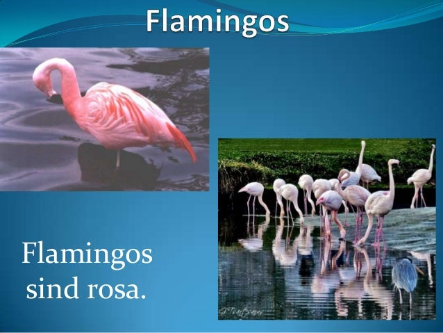 Flamingos sind rosa.
