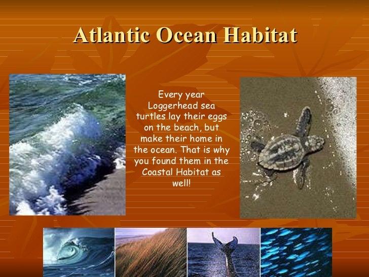 Atlantic Forest  Wikipedia