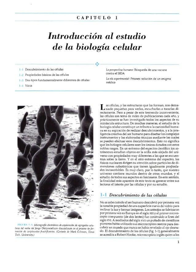 CAPIT-ULO  1  Introducción al estudio de la biología celular 1-1 Descubrimiento de las células  La perspectiva humana: Bús...