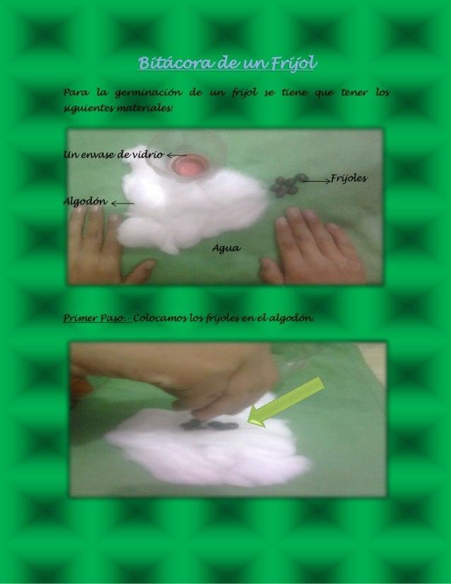 Bitácora de un Frijol Para la germinación de un frijol se tiene que tener los siguientes materiales: Un envase de vidrio F...