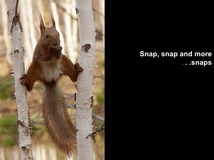 Snap, snap and more snaps. .  .