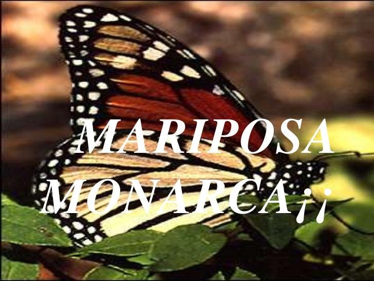 Mariposa monarca!
