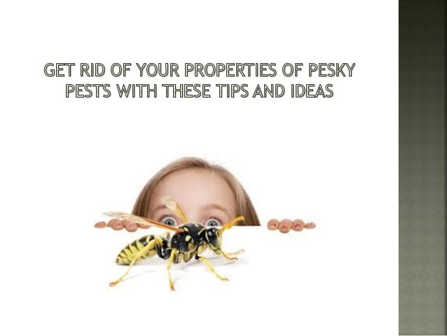 Are you tired of the pests running around your house? Perhaps exterminators come home from time to time but you still have...