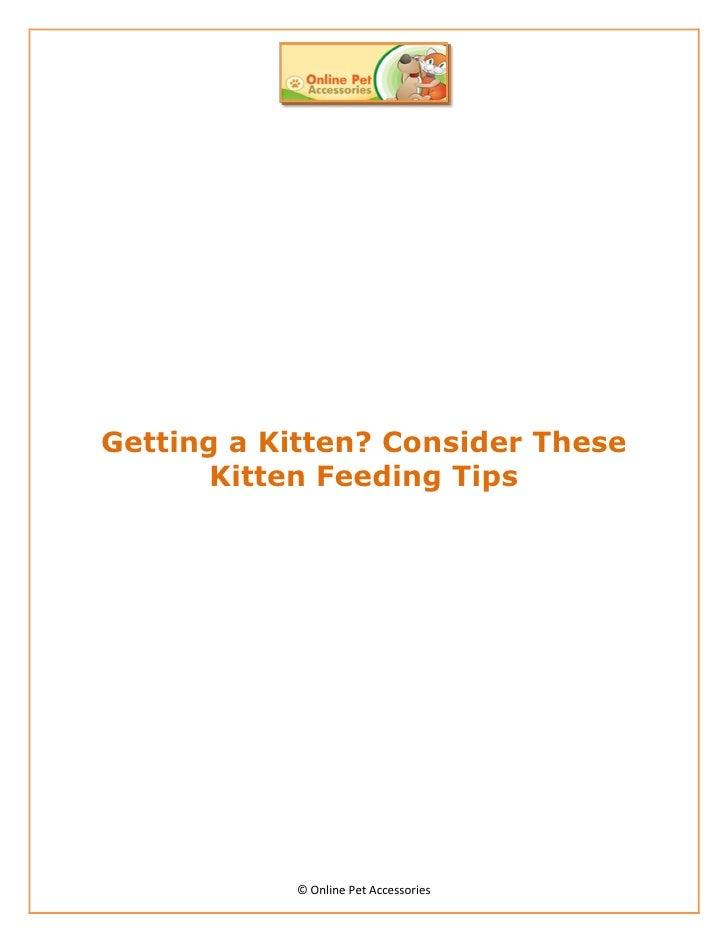 Getting a Kitten? Consider These       Kitten Feeding Tips           © Online Pet Accessories