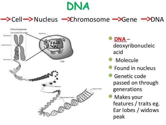 Getting into genes slideshare copy