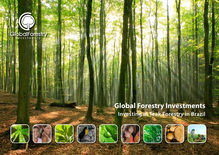 Global Forestry Investments  Investing in Teak Forestry in Brazil