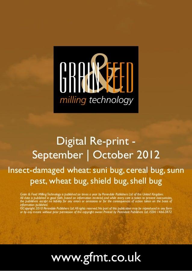 Insect-damaged wheat: suni bug, cereal bug, sunn pest, wheat bug, shield bug, shell bug