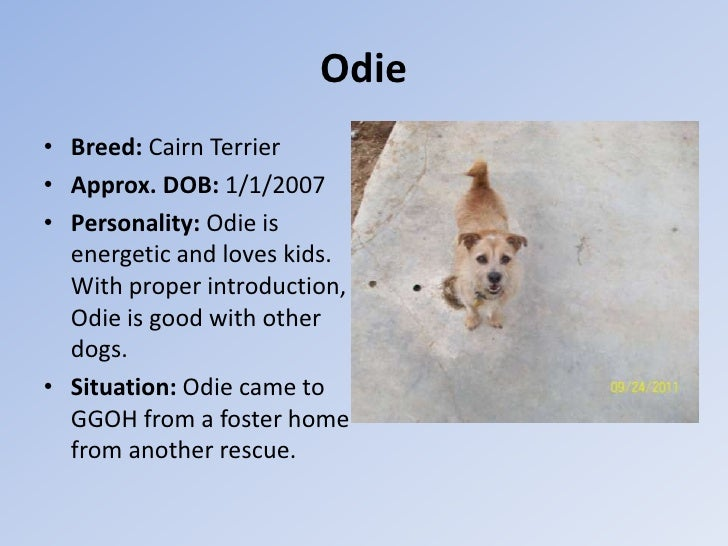 Odie• Breed: Cairn Terrier• Approx. DOB: 1/1/2007• Personality: Odie is  energetic and loves kids.  With proper introducti...