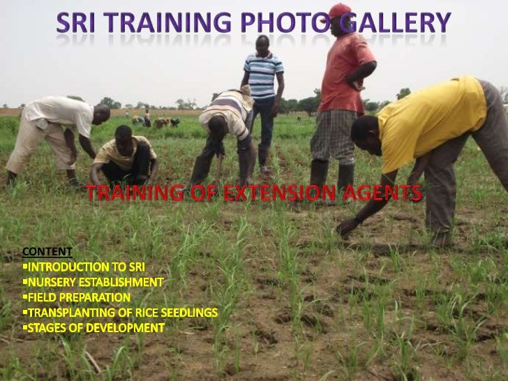 1293-SRI Photo Gallery: Training of Extension Agents in Ghana