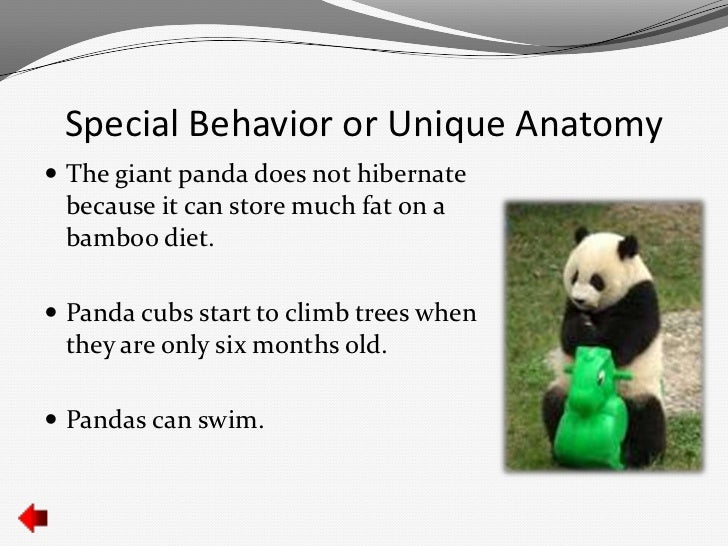 Giant Panda Anatomy