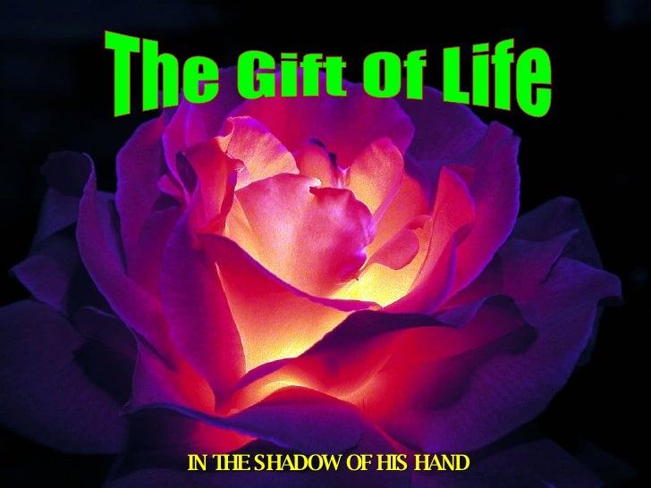 The Gift Of Life IN THE SHADOW OF HIS HAND