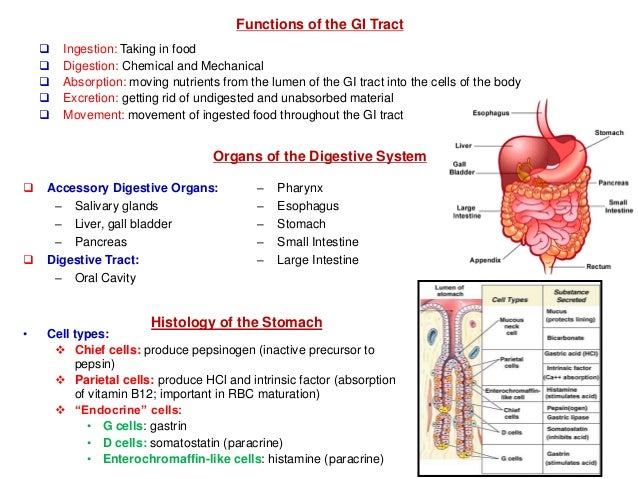 Organ Where Food Is Absorbed
