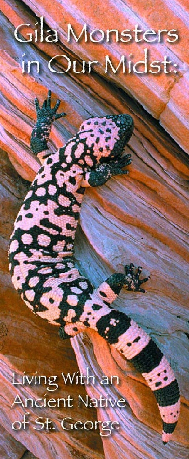 I f you live, work or play in the desert around St. George, you may come upon a Gila Monster. The Gila Monster is an ancie...