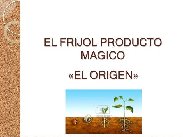 EL FRIJOL PRODUCTO       MAGICO   «EL ORIGEN»