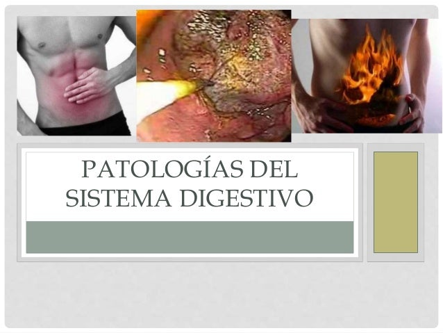 sistema digestivo pato: