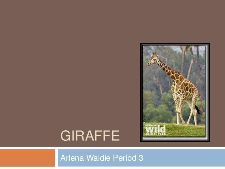 GIRAFFEArlena Waldie Period 3