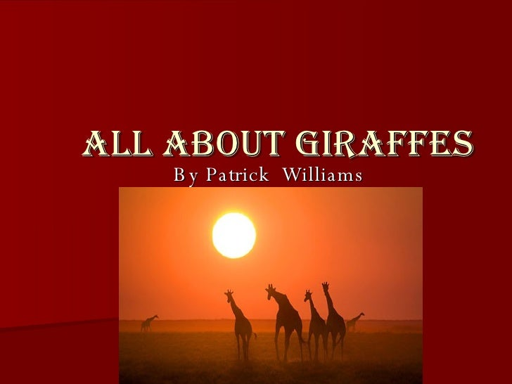 All About Giraffes By Patrick  Williams