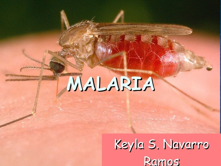 Keyla S. Navarro Ramos MALARIA