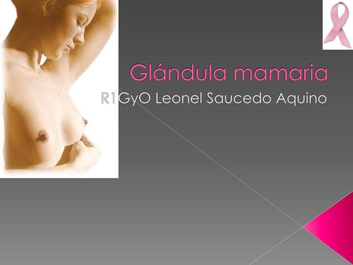  Ectodérmico Mamíferos Parénquima glandular, compuesto de    › alveolos y ductos,    › y un estroma de soporte.