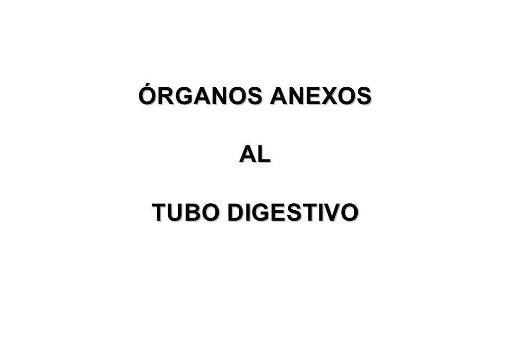 ÓRGANOS ANEXOS      ALTUBO DIGESTIVO